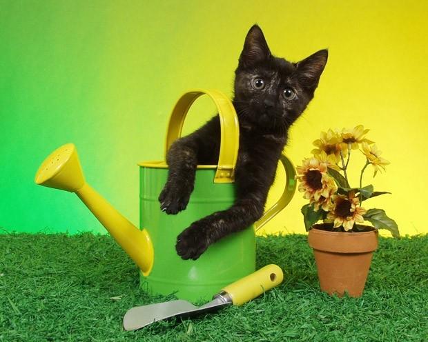gatto-e-giardinaggio