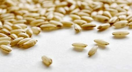 Un piccolo grande cereale: il riso