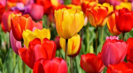 Tulipani italiani 2019, in primavera torna il giardino fiorito