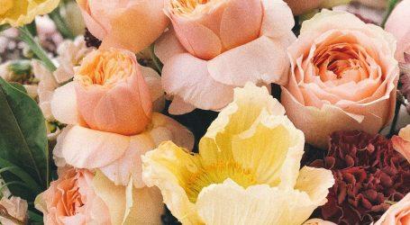 Fiori e piante online per la festa della mamma