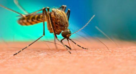 Coronavirus, ISS conferma: le zanzare non trasmettono il virus