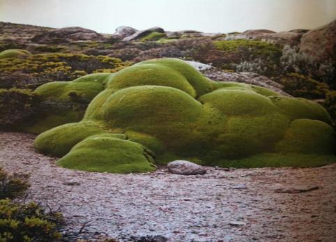 rp_GREEN-ISLAND-2014.jpg