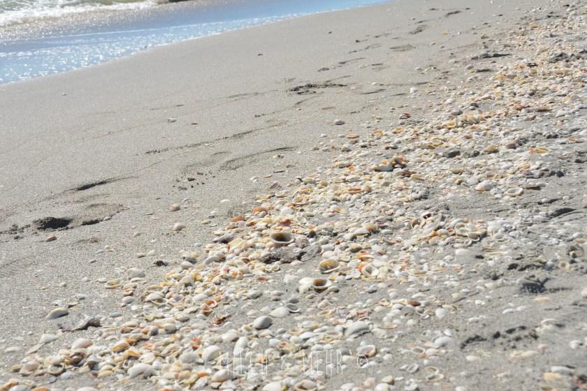 Florida Kinderparadies Sanibel Island Muscheln