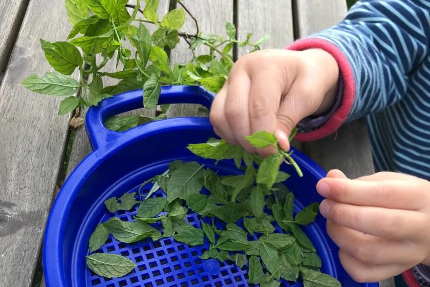 WIB #kw36 Gartenarbeit mit Kindern