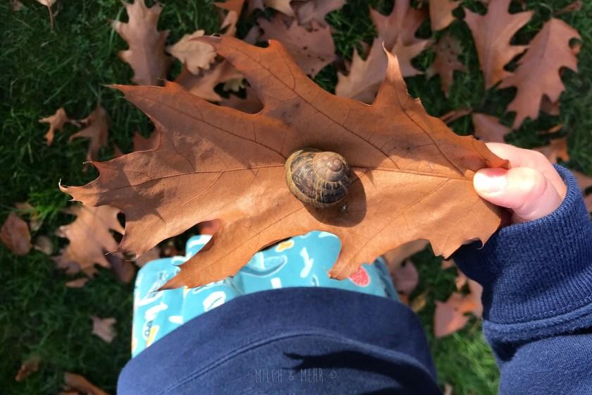 WIB #kw43 Schnecke retten im Herbstlaub
