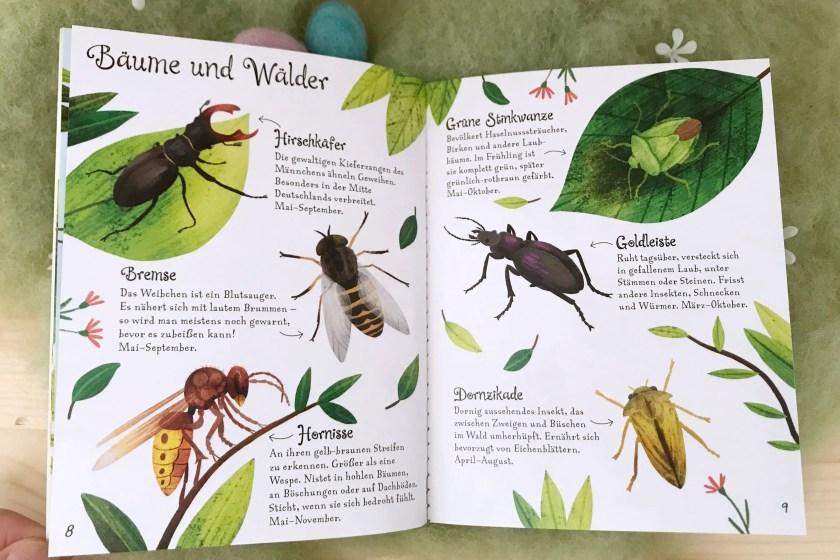 FruehlingsBuchtipp Insekten bestimmen