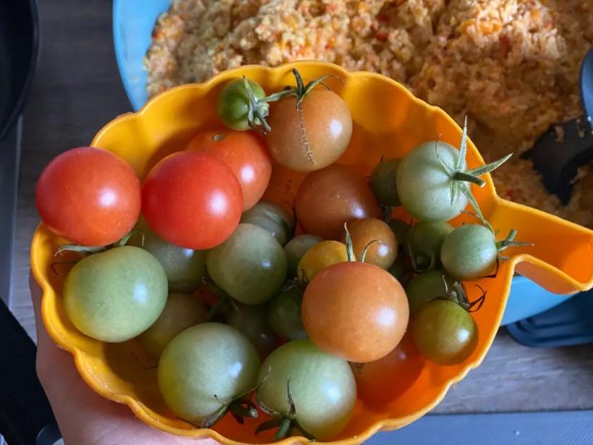 Tomaten drinnen reifen