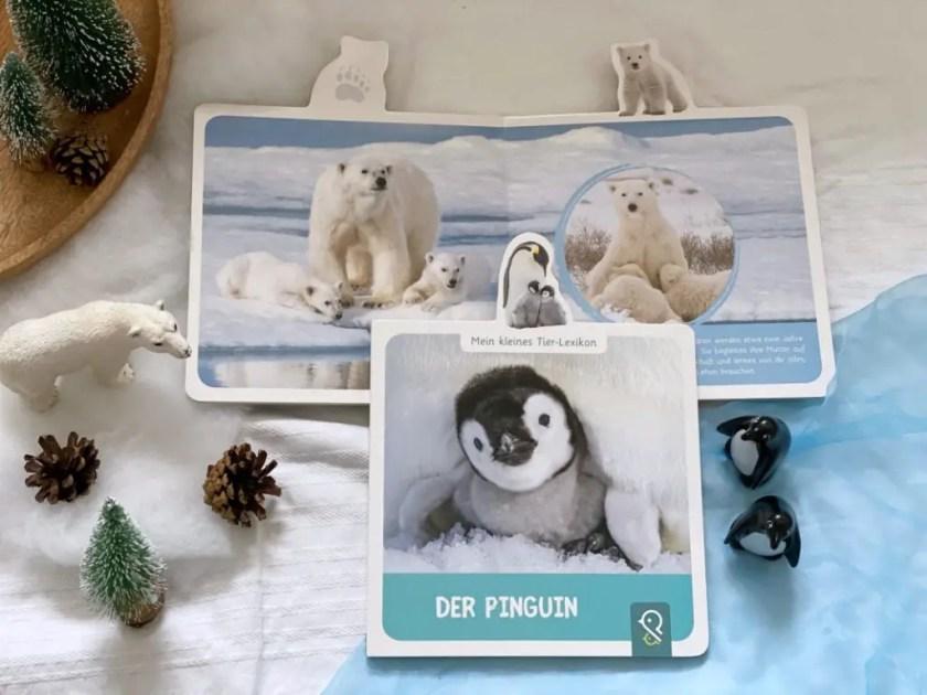 Bilderbuch Pinguine Eisbaer