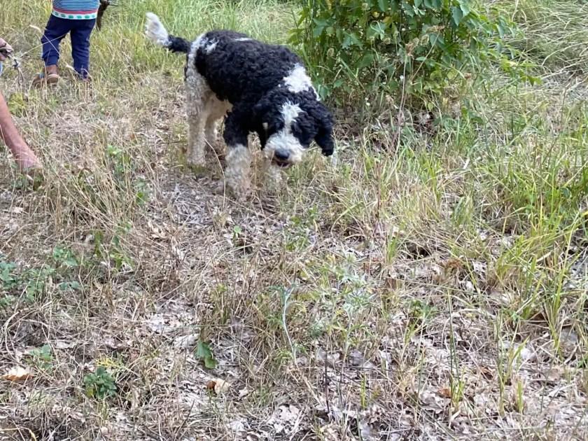 Hund im Wald Toskana
