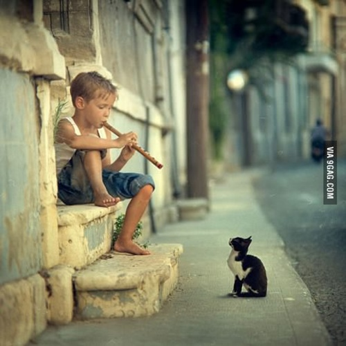 músicas para todos