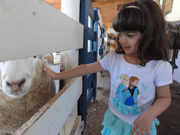 Conhecendo os carneiros