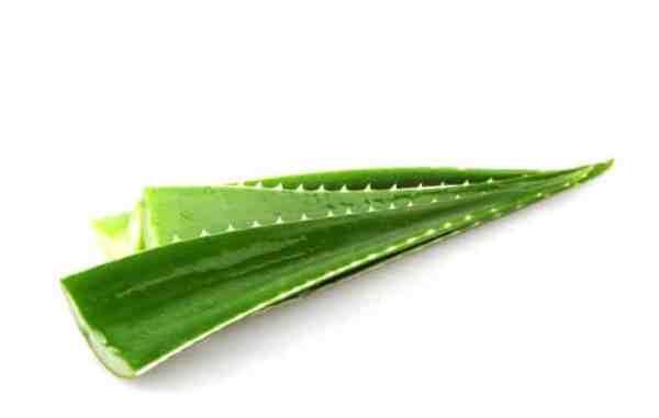 Aloe vera para assadura de bebê