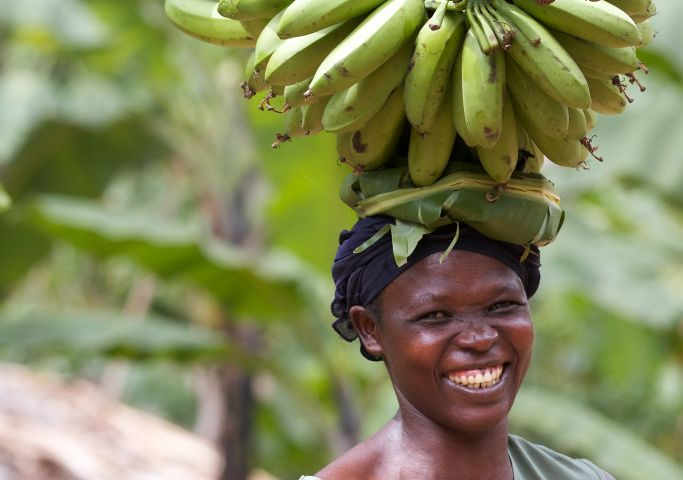 A lady carrying a large bunch of bananas on her head, Uganda.