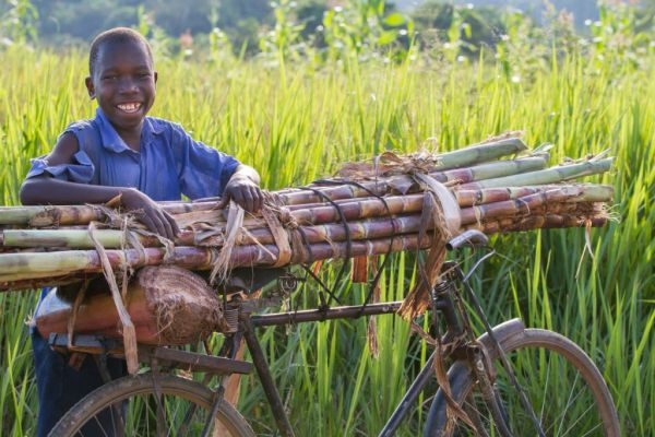 A boy selling sugar cane from a bicycle, Uganda