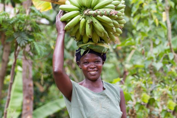 A lady carries bananas on her head, Uganda