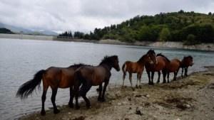 I Cavalli Selvaggi d'Aveto