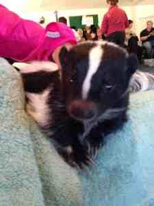 My friend the skunk