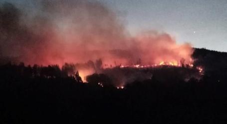 Incêndio em Guimarães consumiu cinco hectares