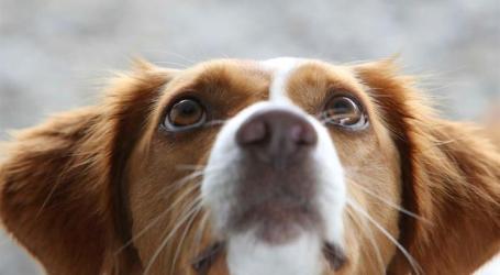 Veterinários alertam para aumento do número de animais abandonados em Portugal