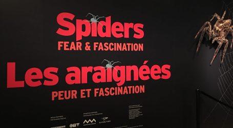 """""""Aranhas: Medo & Fascínio"""""""