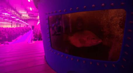 Marijuana fertilized by fish waste? A Canadian cannabis company is making it happen