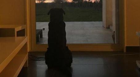 A fotografia do cão de Sala que emocionou o Facebook
