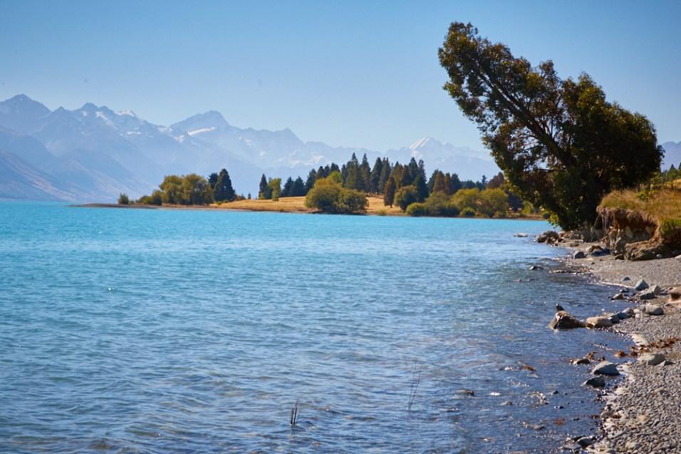 Lake Pukaki, Aussicht, view, gelbes Gras, Baum, Mount Cook Nationalpark, Gletschersee, See, eisblau, Wasser, Berge