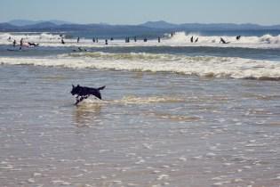 Byron Bay, Australien, Wellen, Hund, Surfer, Reisetipps, reisen, Travelblog, travelblogger