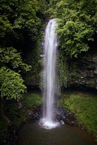 Dorrigo National Park, Australia, Australien, Roadtrip, Crystal Falls, Wasserfall, Attraktion, must see, wunderschoen, regnerisch, Womba Walk, Regenwald