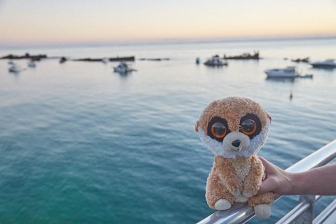 Ed, das Erdmännchen, Reisemaskottchen, Moreton Island, Insel, Meer, Schiffswracks