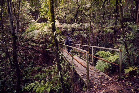 Ronnie, Brücke, bridge, Barrington Tops, National Park, Wanderung, backpacking, hiking, raining, rainforest, Urwald, Regenwald