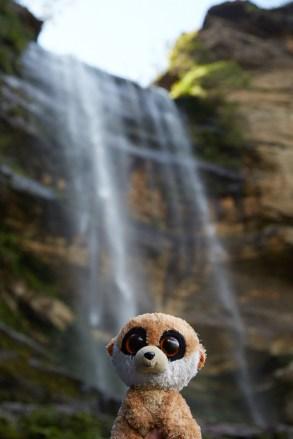 Wentworth Falls, Wasserfall, Ed, Educto, Ed das Erdmännchen, Ed on Tour, Stofftier, plush toy, mascot, Maskottchen, Blue Mountains