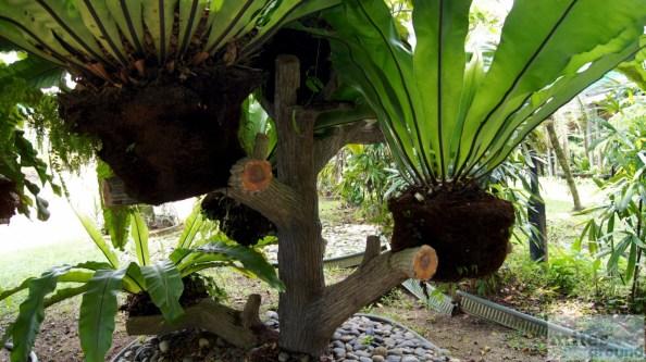 Kuala Lumpur - Orchideengarten (Taman Orkid)