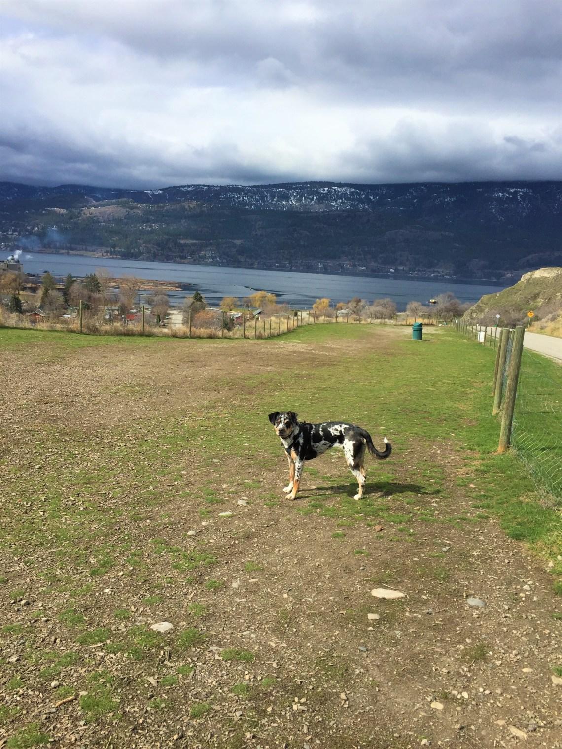 Off Leash Dog Park Knox Mountain Kelowna