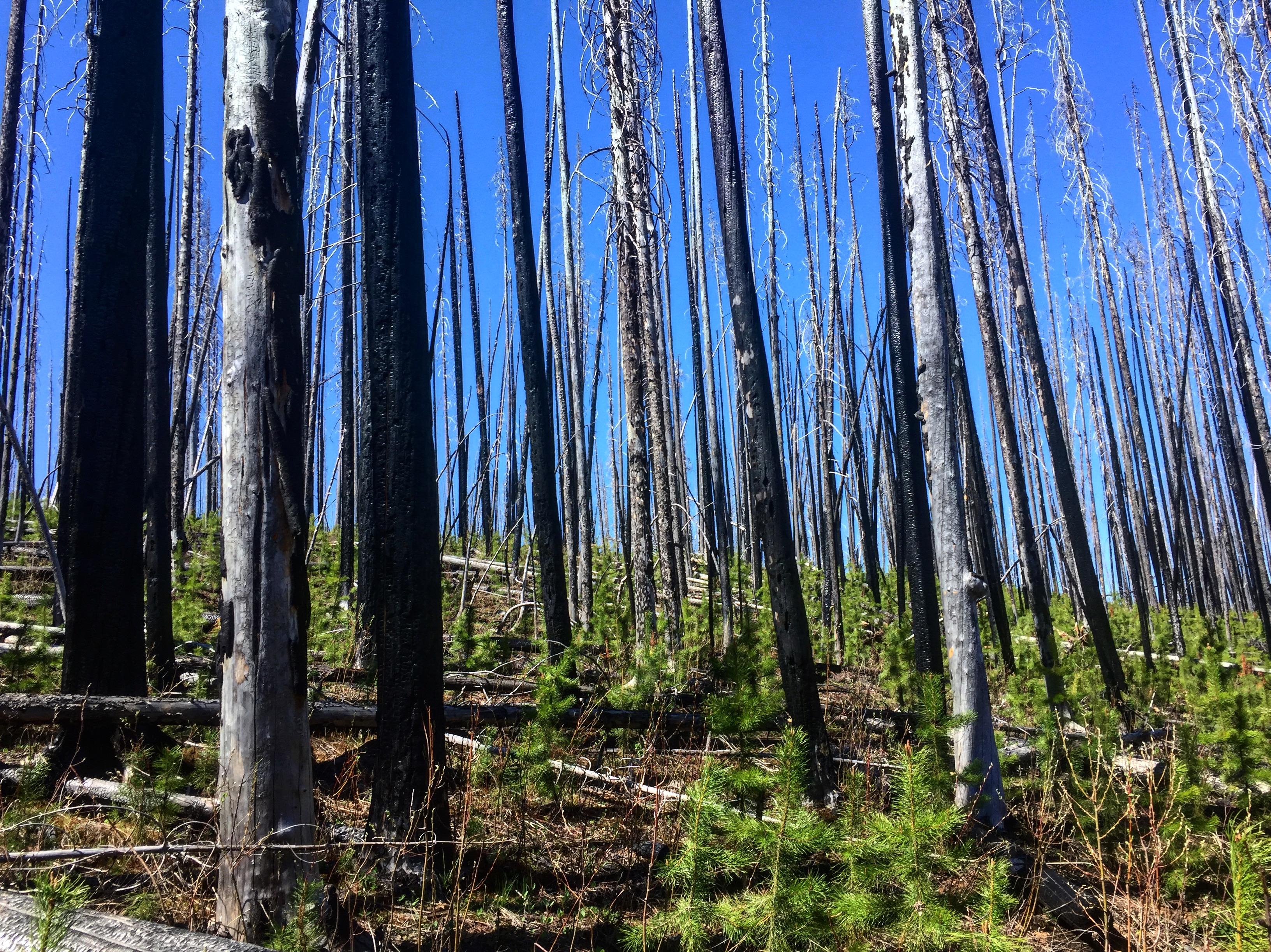 Christie Falls Trees Terrace Mountain Wild Fire