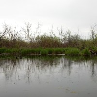 Lake Waubesa Wetlands