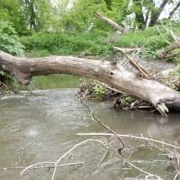 Pecatonica River