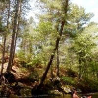 Coon Fork Creek