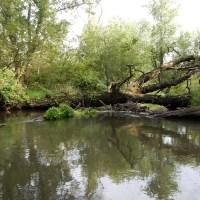 Little Sugar River