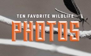 10 Favorite Wildlife Photos