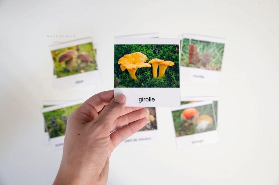 Cartes de nomenclature champignons à télécharger et activités complémentaires