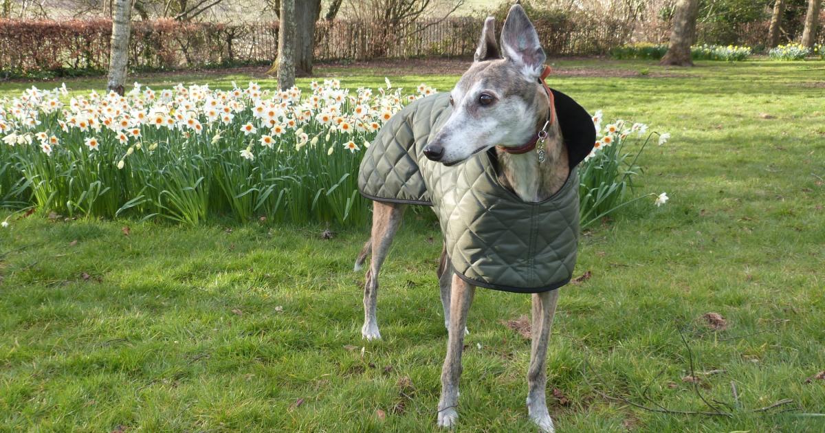great sofa beds ashley sleepers milgi coats - beautiful fleece coats, raincoats, walking ...