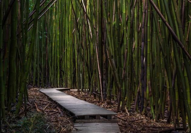 Bambu.  Bahçe ve dış mekan için dayanıklı bitki.  #Bahçe #Bitkiler #Dekorasyon