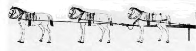 Предписанное обтягивание с 6 лошадями