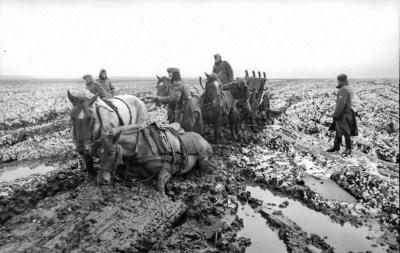 Немецкие упряжные лошади в тине похода России