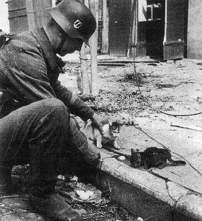 Солдат оружия СС гладит маленьких котят