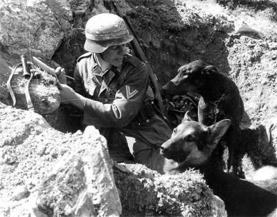 一名德国士兵和他的两只狗