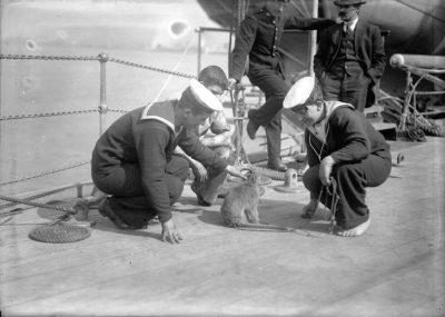 Члены экипажа ГиС Нев Цеаланн играют при посещении в Ванкувере с обезьяной