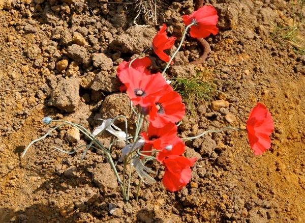 War and Peace Show Photos 0130