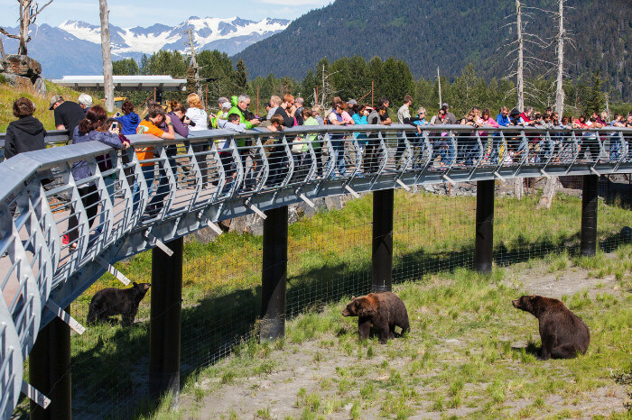 Alaska Cruise Discounts for Military and Veterans Anchorage Wildlife Viewing
